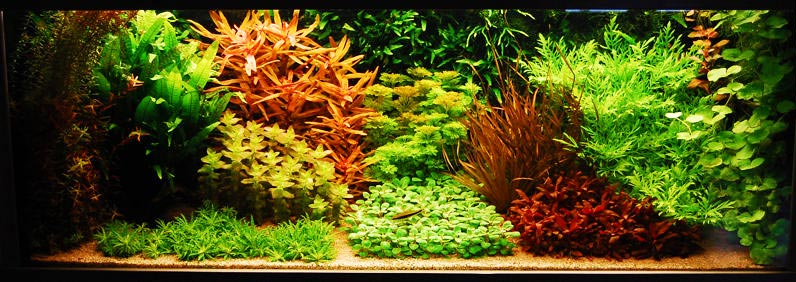 Dutch Style Planted Tank