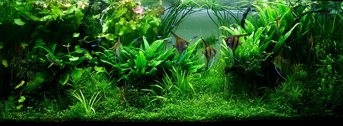 Jungle Style Planted Tank