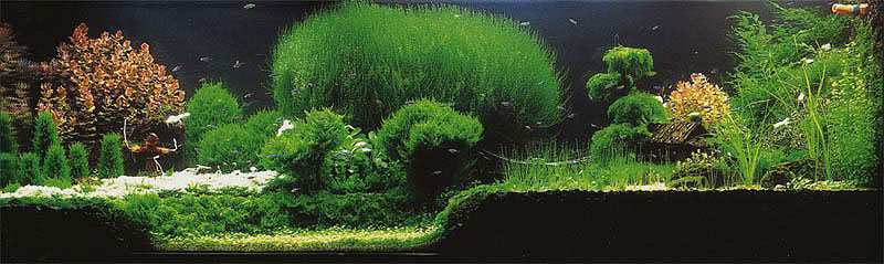 Taiwanese Style Planted Tank