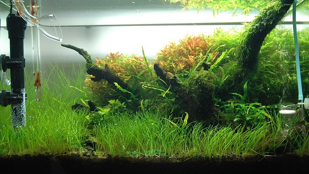 The Importance Of A Fish Tank Heater The Aquarium Guide