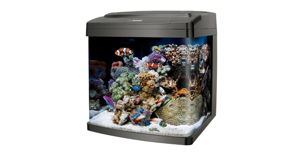 Best 29 gallon aquariums the aquarium guide for 29 gallon fish tank