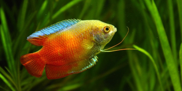 Tropical fish care freshwater tropical fish guides for the.
