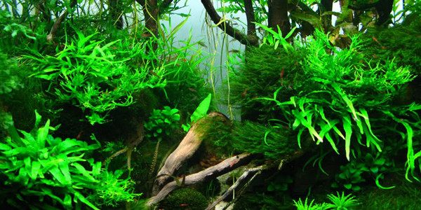 Attractive Jungle Aquascape Style