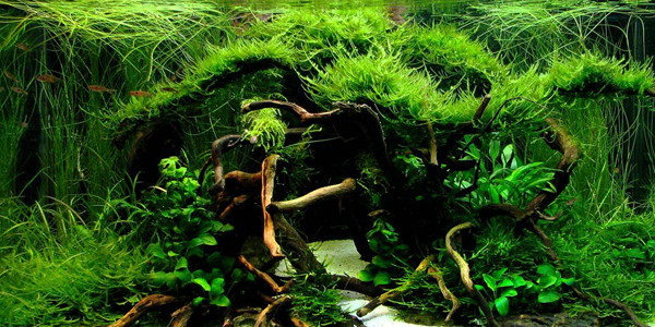 Delightful Jungle Style Aquascaping