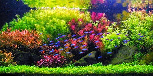 Attractive Challenges Of Dutch Aquascaping Style