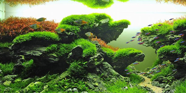 Understanding Taiwanese Aquascaping Style | The Aquarium Guide