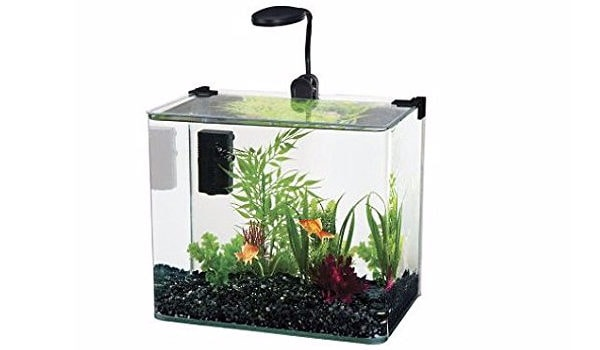 When Creating Your Aquarium There Are Many Factors To Consider Yet The Choice Of Selecting A Small Or Large Fish Tank Will Impact Overall Design