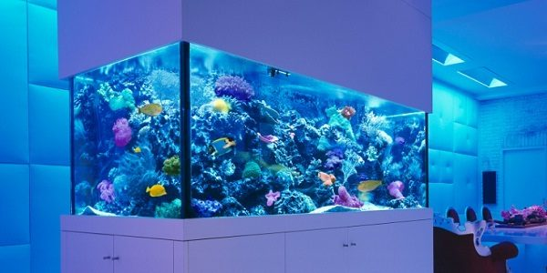 fish tank bedroom advantages of a custom aquarium the aquarium guide 11544